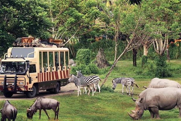Bay đến Jakarta nên du lịch ở công viên Taman Safari
